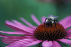 gardening with pollinators